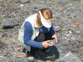 Prospector Gizelle Erdei examines gold-bearing quartz at a Nova Scotia gold district.